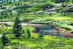 У истоков реки Косью